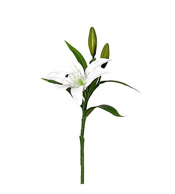Greensets NZ  Easter Lily Spray White