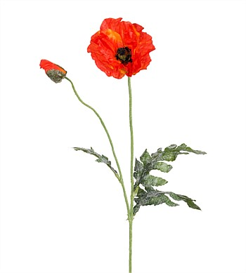 Greensets NZ  Poppy Stem Orange